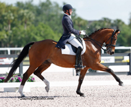 Endel Ots Debuts Cutler Farm's Verida in Prix St Georges at the Dressage National 5